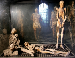 Museum Of The Mummies