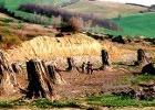 Foresta fossile di Dunarobba