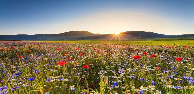 Italy, Sibillini Mountains, Castelluccio of Norcia, flower bloom