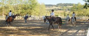 A horse: riding lessons for children and adults!