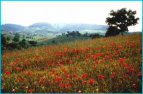 25 Aprile In Umbria