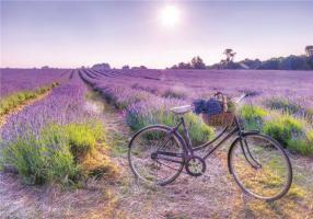 Bike Ride to Assisi lavander garden