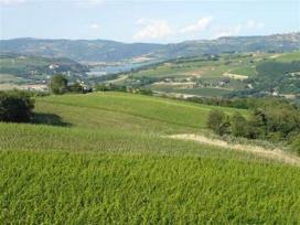 tordimaro-vini-umbri-37101