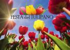 festa-del-tulipano