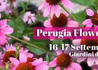 Perugia_Perugia Flower Show_Winter 2017