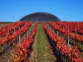 Carapace, Scrigno D'arte Per Il Vino