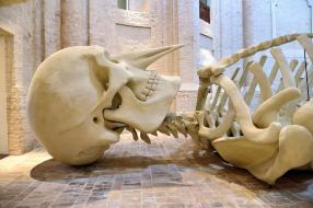 Calamita Cosmica: A Foligno L'opera Di De Dominicis